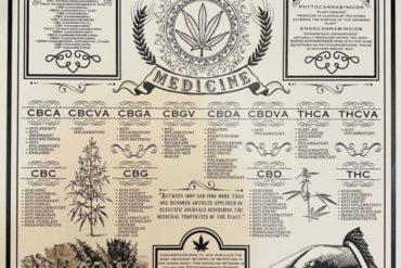 Introducción a la Medicina Cannabinoide